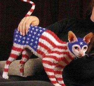 american_flag_cat3