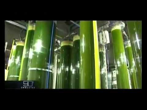 petrole à partir d'algues
