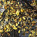 Belle matinée d'automne à rennes le 13 novembre 2017 (1)