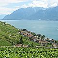 Jongny, vignes et village (Suisse)