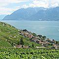 Jongny, vignes et village (Suisse)