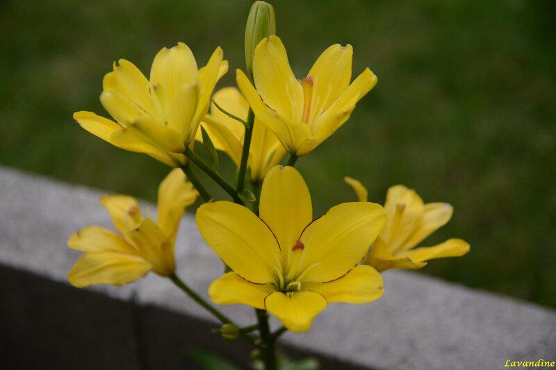fleurs du jardin 06 18 (26)