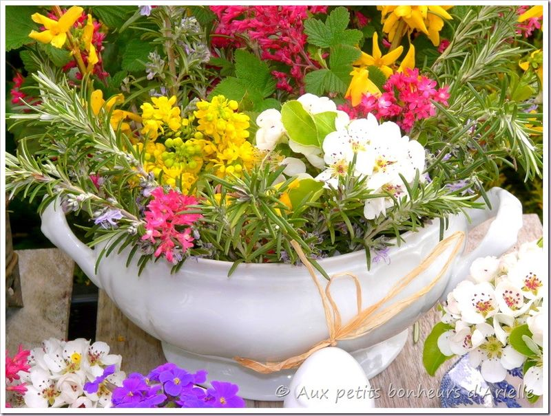 Pâques en fleurs (4)