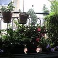 Jardinière estivale, côté rue