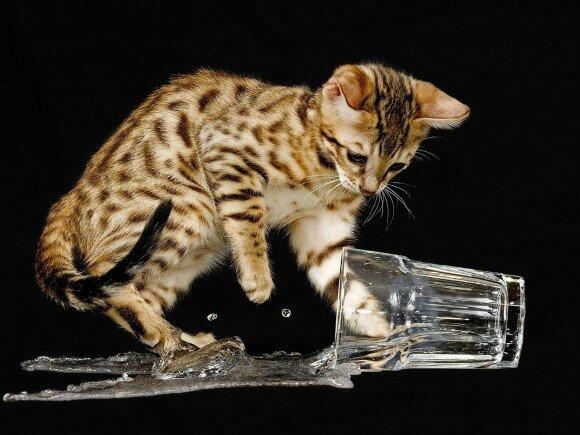 peur-chat-eau