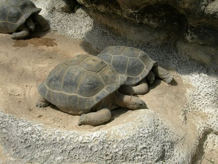 2tortues