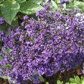 jardin des plantes 050