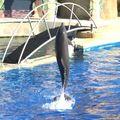 Les dauphins de poussi du marineland antibe de la part d eric