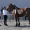 Présentation des chevaux de trait à naucelle