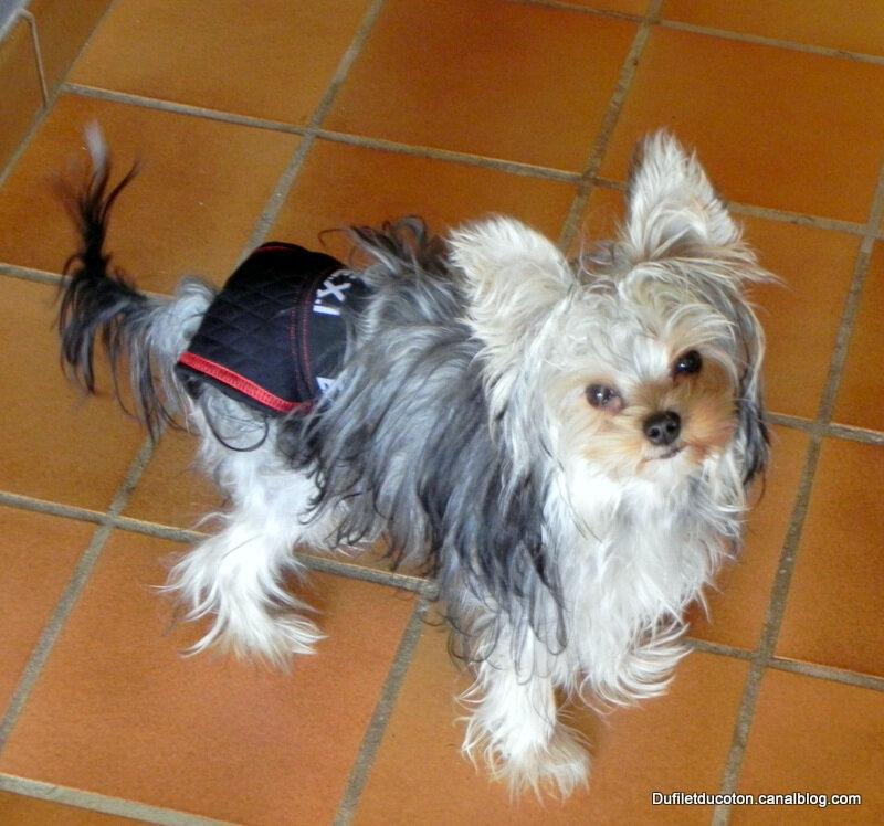 Lingerie chien3