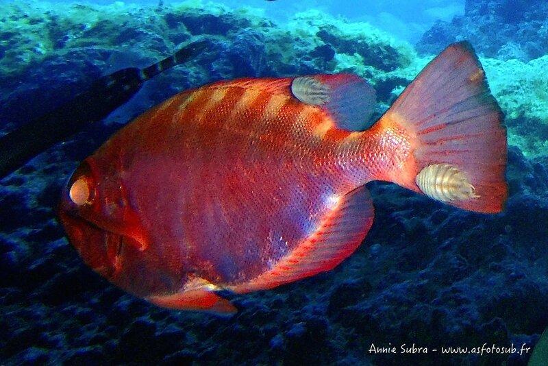 Anilocre_12-07-2012