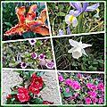 Un petit tour dans mon jardin ... ce matin