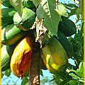 blog_arbre4