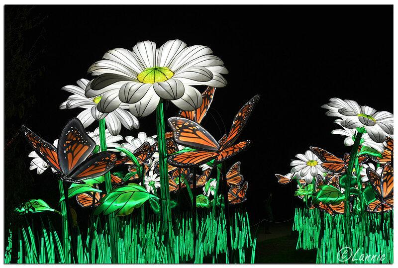 Paris_Expo_J_Plantes_papillons