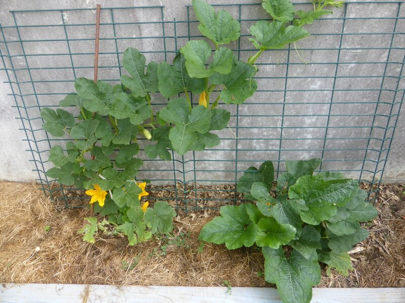 6-courgettes (2)