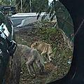 Deux chiens en grande détresse Nord Guadeloupe 23 Nov 2016