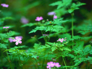 Forest_Flowers