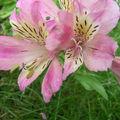 >> fleurs, verdure, chat de campagne…