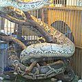 Les serpents des restaurants de l'allée aux serpents
