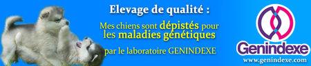 banniere_maladie_chien