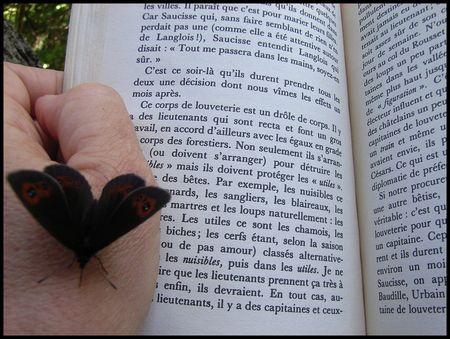 papillon26_07_2009__82_