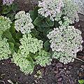 Petites fleurs mais gros bouquets