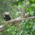 Jardin botanique de paris - objectif panda