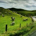 Jouer à saute-moutons...