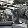 05 Les Marmottes (77)