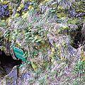 Grottes à Dourgne