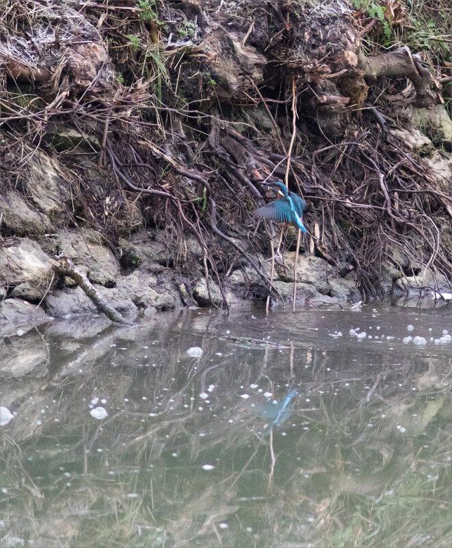 Oiseau MP 2 poisson 260121