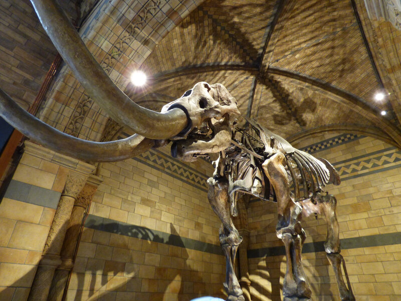 25 Londres Natural History Museum (10)
