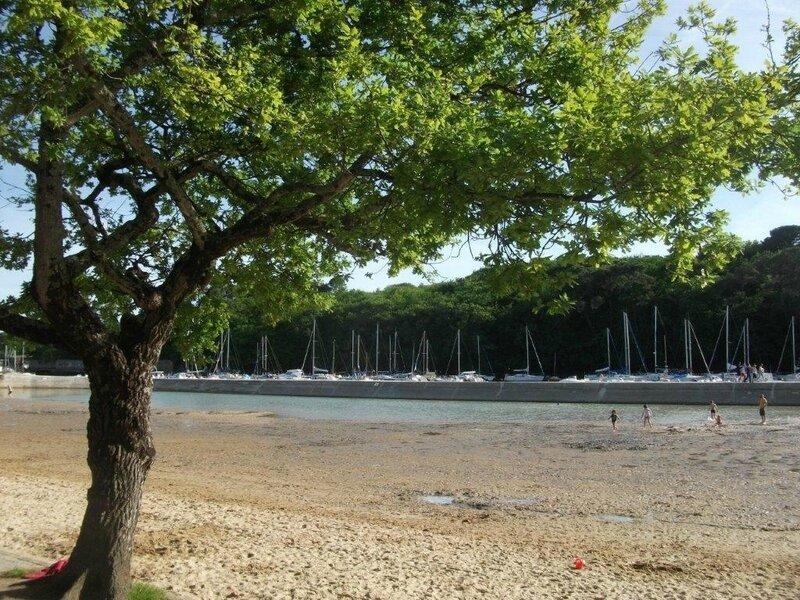 anikenitet arbre à la plage