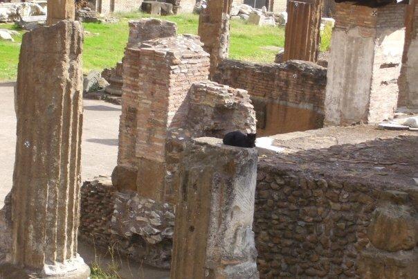 rome largo torre di argentina matou