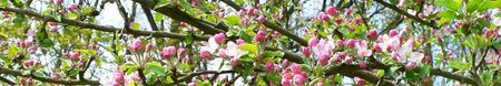 printemps_0522