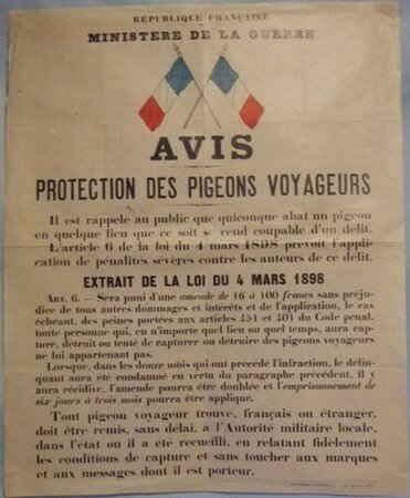 pigeons_protection