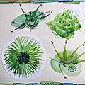 Azoline 2014-Globulus verts 2