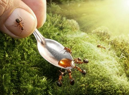 ant-photography-5
