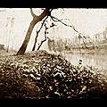 Saule pleureur sur la Meuse