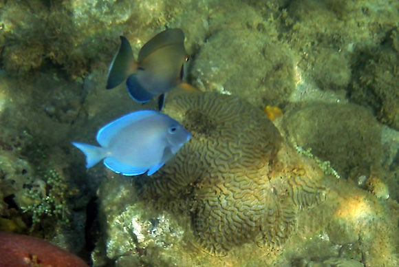 Photographie-Nature-Fond marin-Poisson-Martinique11