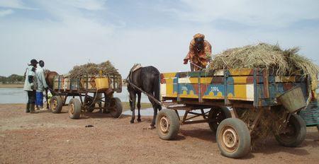 Attelages colorés au bac de DJENNÉ Mali