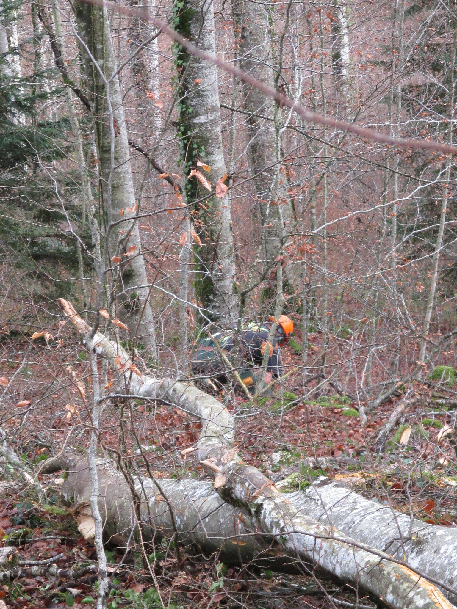 nous sommes très souvent dans les bois