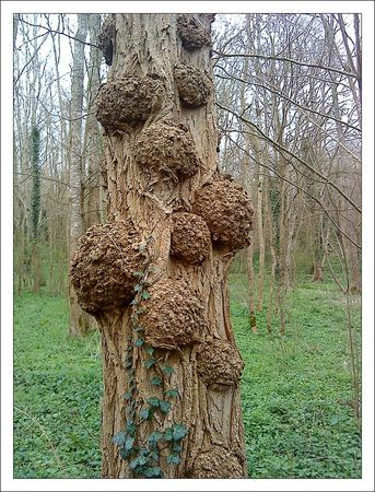 arbre_galeux