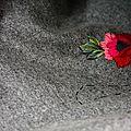 Les fleurs de muhu #1