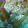 crevette (3)