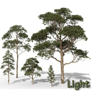 01 Eucalyptus globulus tasmania blue gum tropical jungle forest 3d tree Icon