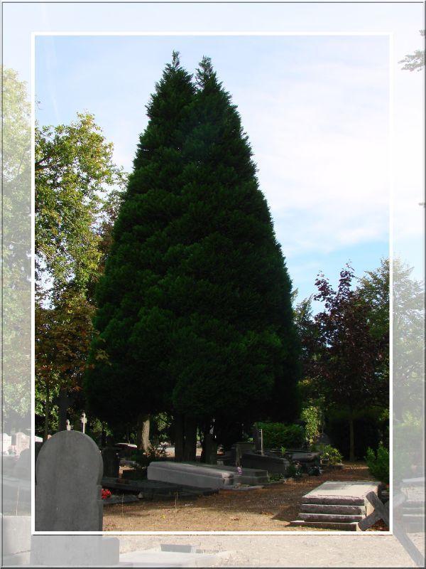 cimetière 7