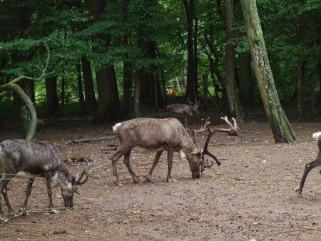 Parc_Animalier_de_Stez_Croix_12
