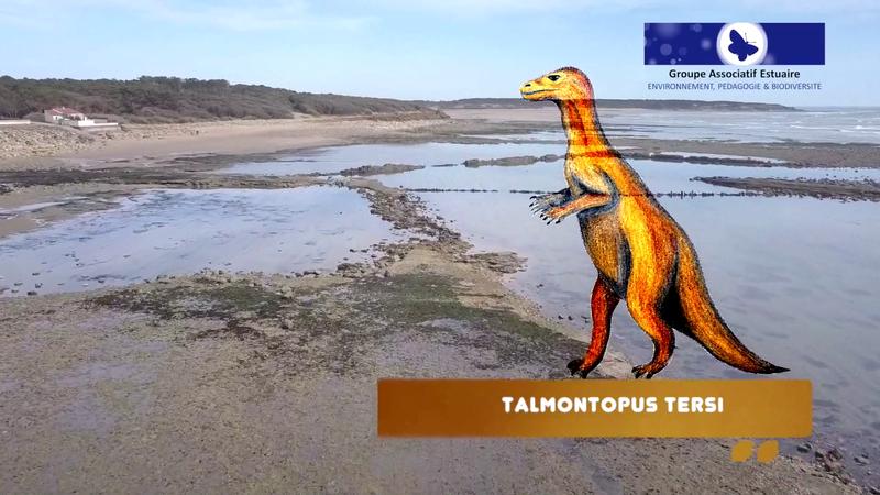 Talmontopus tersi Vendée Talmont St Hilaire plage du Veillon