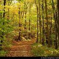 Forêts de l'ile-de-france